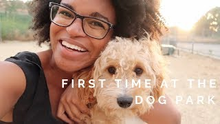 Puppy Goes to the Dog Park for the First Time | Life with Noah the Cavapoo