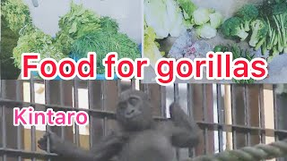 Breakfast time, gorillas eat these foods! & a baby show / 朝食の時間、ゴリラはこんなの食べてます &キンの遊び集?!【Zoo Gorilla】