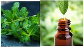 Homemade Peppermint Oil ||100% Natural Easy DIY Essential Oil