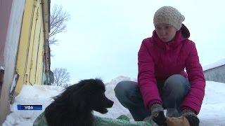 Уфимцы развернули настоящую спасательную операцию, чтобы помочь собаке с переломанными лапами