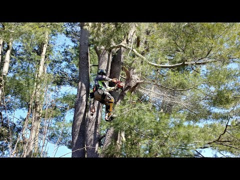 We recently did a large hazard White Pine removal for a client utilizing a crane due to limited access to the tree and to make minimal impact to the surrounding landscape.