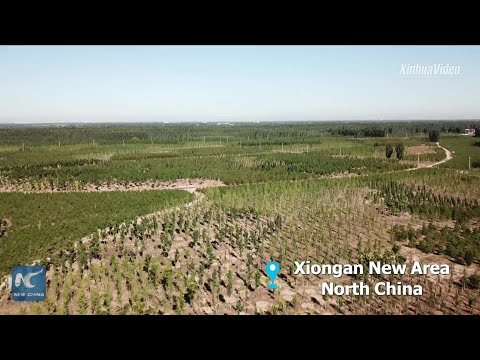 China's Xiongan New Area makes new progress in eco-friendly development