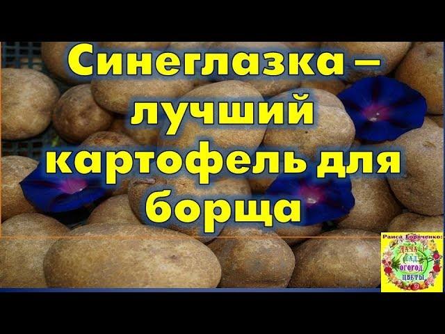 Видео Картофель Синеглазка