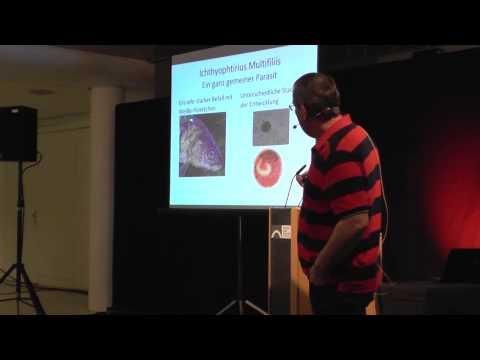 Die Tablette von den Würmern dem Menschen für die Prophylaxe
