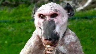 TOP 15 Animales Terroríficos Que No Creerás Que Existen