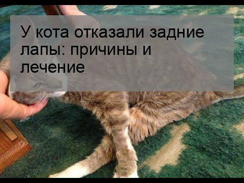 У кота отказали задние лапы: причины и лечение