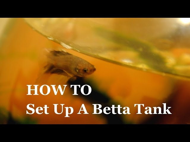 How To Set Up a Betta Tank - Timelapse