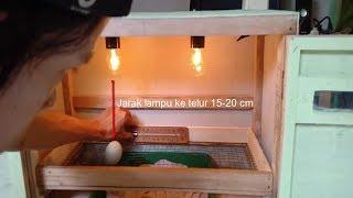 Cara membuat penetas telur ( how to make egg incubators )