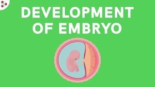 Development of Embryo | Reproduction in Animals | Don't Memorise