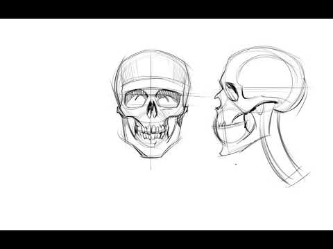 Drawing the human skull from memory