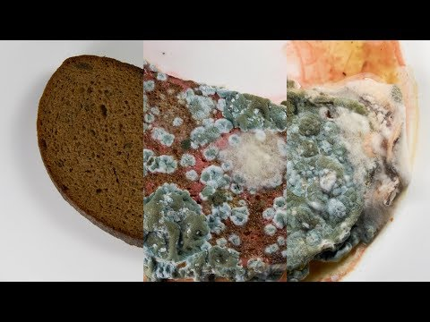 A Moldy Time Lapse of Bread in Water