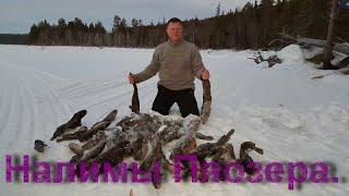 Ловля налима в карелии зимой