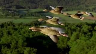 Группа Рождество - Улетают птицы (корректировка звука).