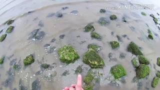 На Азовском море можно рыбачить руками - Видео онлайн
