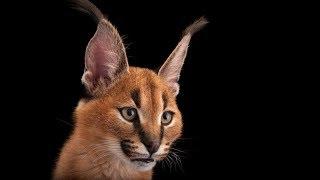 Beautiful Photos Of Animals Facing Extinction | Joel Sartore | TEDxMidwest