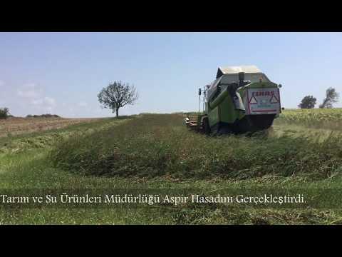 Silivri aspir hasadı 2017
