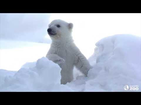 NAVER まとめ超絶可愛い! クマ科動物の赤ちゃん画像&動画集