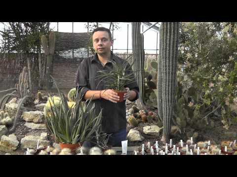 Aloe - drei Tipps zur Pflege
