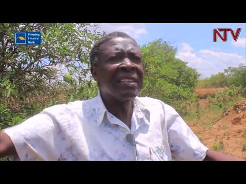 Soroti fruit farmers' ask for urgent intervention on irrigation