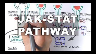 JAK-STAT Signalling Pathway