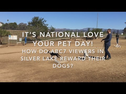 How ABC7 viewers celebrate National Love Your Pet Day | ABC7