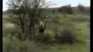 охота на льва и нападение на человека ( hunting for a lion and attack for the person )