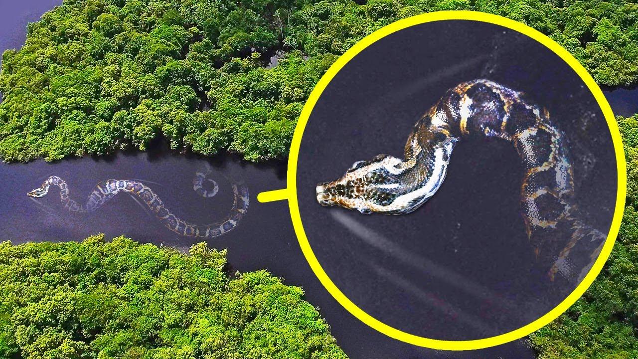 Самая тяжелая змея в мире и еще 17 монстров Амазонки