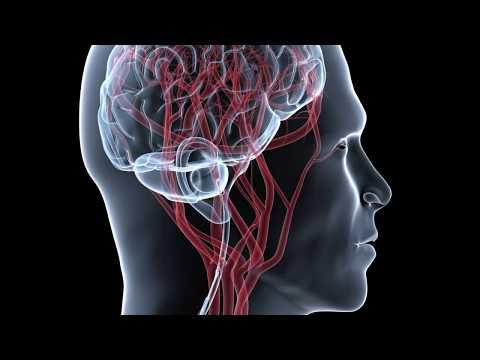 Гипертония и нервная система