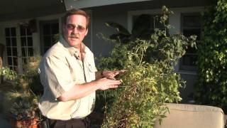 Home & Lawn Pest Control : How to Keep Raccoons Away