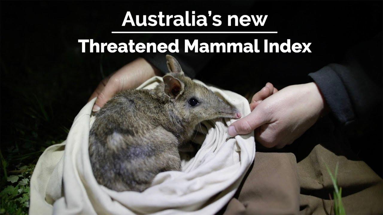 Australia's Threatened Mammal Index