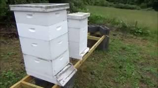 Beekeeping- New Outyard that has Bears