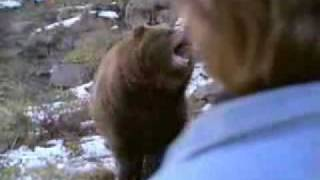 Chuck Norris Vs Bear