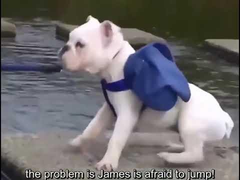 Очень смешное видео обезьяны с собакой
