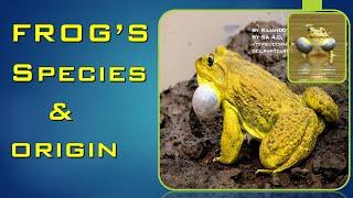 FROG SPECIES| ORIGIN AND LIFESPAN (#17)