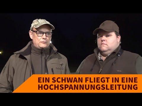 bockjagd: Bockjagdsaison: Video-Interview zur selektiven Jagd in Polen– Schwan fliegt in Hochspannungsleitung