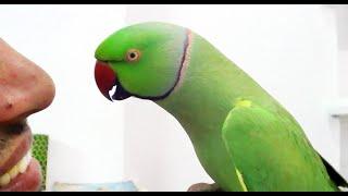 Conversation with my parrot,Worlds best Bird.