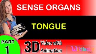 CH06-SENSORY SYSTEMS-PART08-THE TONGUE