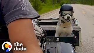 Motorcycle-Loving Senior Husky Get His Own Sidecar | The Dodo Soulmates