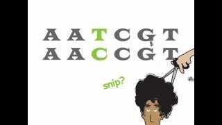 Genetics - Single Nucleotide Polymorphism (SNP)