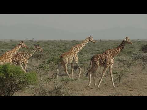 Wildlife at Ol Malo