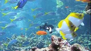 Philippine Coral Reef Dive | California Academy of Sciences