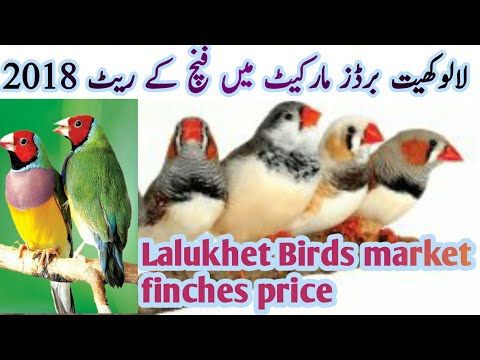 Download Lalukhet Birds Market Price Karachi Exhibition And Hagorom