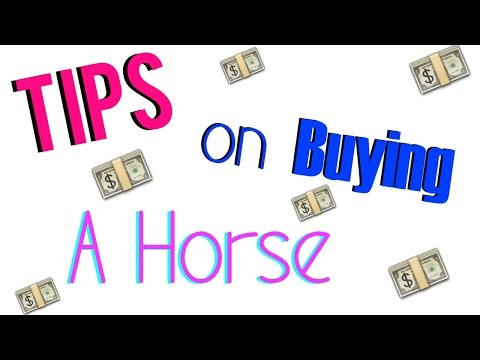 Tips on Buying A Horse