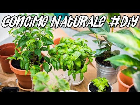 Concime Naturale / Fertilizzante Liquido Fai da Te - Liquid Fertilizer DIY
