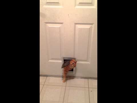 Fat Cat Stuck In Catflap Causes Internet Flap 171 Why
