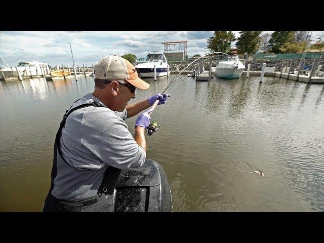 Bobber Fishing for GIANT Harbor Fish!