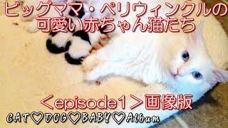 赤ちゃん猫生まれたての赤ちゃん猫の成長と子育て