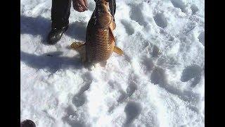 Ловля сазана зимой со льда на пруду