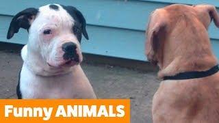 animales perros graciosos