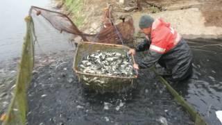 Волгоград варваровское водохранилище рыбалка